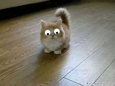 Googly Eyed Cat