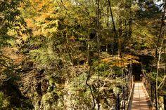 お手軽すぎるぞ奥多摩!駅から徒歩3分の氷川渓谷で気軽に清流吊り橋散歩をする #tokyo島旅山旅   エアロプレイン Vineyard, Country Roads, Japan, Spaces, Nature, Outdoor, Outdoors, Naturaleza, Vine Yard