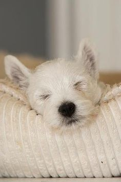 A Little Snooze...