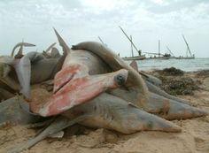 La Chine prend des décisions en faveur des espèces en voie d'extinction - Le Coq Vert