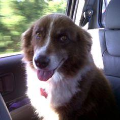 Sheba loves long drives.
