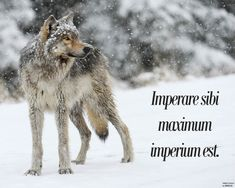 """""""Imperare sibi maximum imperium est"""" which means 'To rule yourself is the ultimate form of power.'"""