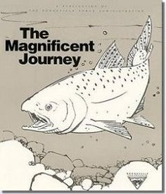 wonderful storyexplanation about salmon the magnificent journey