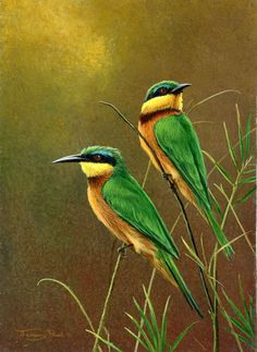 african jewel little bee eaters by Jeremy Paul
