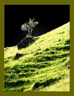 'im Licht pp' von Rudolf Büttner bei artflakes.com als Poster oder Kunstdruck $18.71