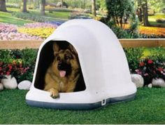This Igloo Dog House is extra large, warmer in winter and cooler in summer. Extra room, igloo dog house shape provides more room than square shelters. Energy efficient igloo shape promotes warm air circulation. The adjustable top ventilation system promotes good air circulation while the extended entrance diverts rain from the doorway, keeping your pet dryer. - See more at: http://www.large-dog-houses.com/blog/lang/us/igloo-dog-house/#sthash.z4s26WFu.dpuf