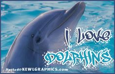 I Love Dolphins Graphic plus many other high quality Graphics for your Facebook profile at KewlGraphics.com.