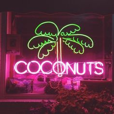 Coconuts neon sign | Hesby Says @shophesby