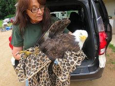 The bird was brought to REGI, where he was given blood tests and weighed. At just over 5 pounds, he was severely underweight. The reason he was in such terrible shape? Chronic lead poisoning. Bullets, fishing sinkers, paint chips and some pesticides are just a few of the hazards littering our country and poisoning birds, including our country's iconic bald eagle.