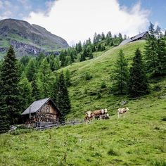 this was captured in Lungau, Salzburg  hashtag your Austria moment #iAustria ! #Salzburg #Lungau #hut #cow #Austria