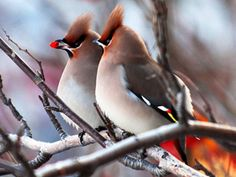 Güzel kuşlar Video