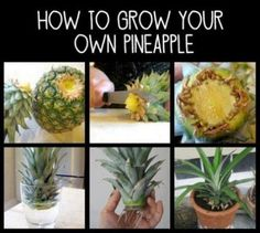 Recept gezonde ananas waterijsjes (+ leuk ananas weetje)