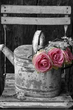 Pink Flowers : shabby chic - watering can - pink ranunculus?tn - Leading Flowers Magazine, Daily Beautiful flowers for all occasions Rosa Shabby Chic, Estilo Shabby Chic, Shabby Chic Decor, Shabby Vintage, Vintage Pink, Dream Garden, Garden Art, Garden Design, Garden Roses