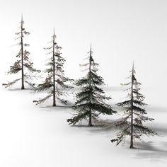 spruce tree drawing - Google Search