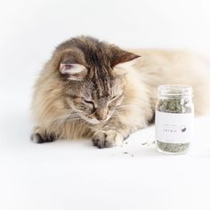 Monday morning is not so bad if you have enough #catnip to get through the week  #mondayinspiration #shopsmall @tabbyjamesco