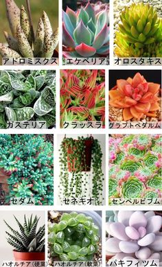 春秋型種 Cacti And Succulents, Planting Succulents, Planting Flowers, Indoor Garden, Garden Art, Indoor Plants, Garden Terrarium, Green Flowers, Botanical Gardens