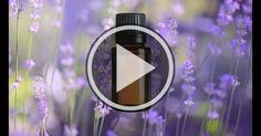 15 second video great for sharing on Facebook or Instagram that explains the benefits of Epoch Lavender Essential Oils in providing a sense of tranquility and peace.