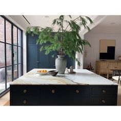 I had a realization this morning as took in the long-needle pine looming beautifully over my kitchen island . These greens go about their… Kitchen And Bath, New Kitchen, Kitchen Dining, Kitchen Island, Kitchen Decor, Kitchen Counters, Kitchen Sink, Kitchen Ideas, Interior Architecture