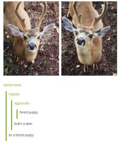 Look at the face on that forest puppy, adorbs! http://www.pleated-jeans.com/2016/01/05/18-tumblr-comments-that-made-the-photo-even-better-2/