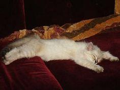 Kucing Muntah: Kucing Muntah dan Tidak Mau Makan (Solusi)