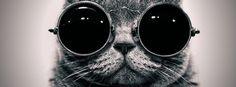 Cool Cat Facebook Cover