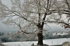 The Smoky Mountains in winter.