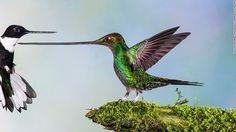 Wildlife Photographer of the Year 2014 awards announced - CNN.com