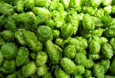 Always use the freshest hops! When dry hopping beers be sure to use whole hops to expose more surface area to the beer. Beer Brewing, Home Brewing, Frankenmuth Brewery, Milk Booster, Home Brew Supplies, Beer Tasting Parties, Beer 101, Beer Recipes, Medicinal Herbs