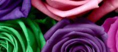 cool-roses-wallpaper