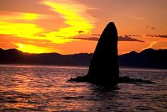 picture of Sunset Whale In Southeast Image