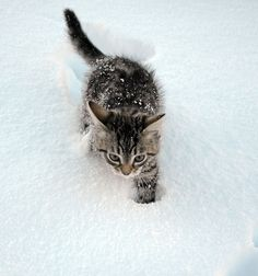 I HATE WHITE, I HATE COLD AND I HATE SNOW. I CAN'T FEEL MY PAWS. I NEED A FIREPLACE AND SOME HOT CATNIP PLEASE.