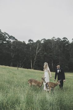 Farm wedding with baby deer!