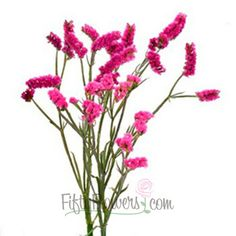 FiftyFlowers.com - Statice Filler Flower Tinted Bright Pink 70 stems @ $119