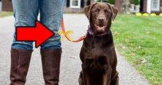 Do You Know What A Yellow Ribbon Tied On A Dog's Collar Means? (this is a great idea for dogs with issues...)