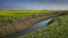 energietransitie : nieuwe en oude windenergie in Fryslân