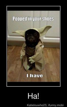 HAHA. yoda dog... great!