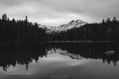 black forest by Kaufmann-Alexander. @go4fotos