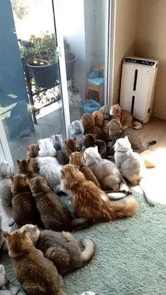 @blackwhite750 Cat Behavior, Animal 2, Cat Health, Cute Funny Animals, Cat Gif, I Love Cats, Best Funny Pictures, Animals Beautiful, Cats And Kittens