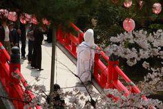 Aichi Prefecture :Okazaki castle park  A cherry tree and a marriage ceremony  April 11,2011