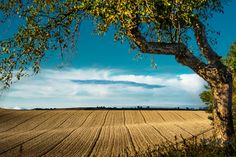 Weinviertel by Martin Washuettl, via Old Sailing Ships, Visit Austria, Open Field, Central Europe, What A Wonderful World, Green Grass, Alps, Country Life, Wonders Of The World
