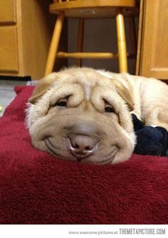 smiling dog... never ending story...