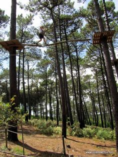 Treetop adventures in Serra da Boa Viagem, Figueira da Foz, central Portugal. Just one of the many things to see and do off the beach at this coastal town. Click the image to read more.