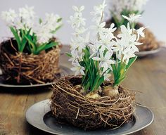 Spring nests with hyacinth bulbs.  Sweet.