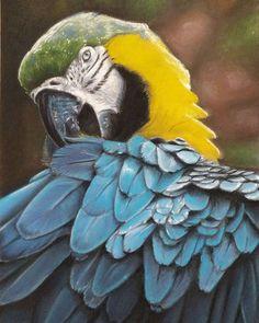 0 Me gusta, 0 comentarios - Jose Hermoso (@hernnoso) en Instagram Pastel, Bird, Instagram Posts, Animals, Cake, Animales, Animaux, Birds, Animal