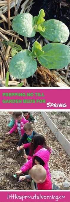 Prepping garden beds for spring planting can be a lot less work than traditionally thought. There are many benefits to growing a no till garden.