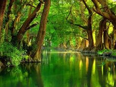 beautiful cypress trees