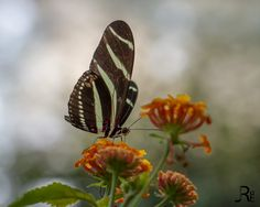 Butterfly - Butterfliege :-) by Jan Rechenberg on 500px