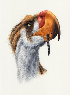 Terror Bird by Esther van Hulsen. Skeleton of the Titanis walleri at the Florida Museum of Natural History. Large Animals, Animals And Pets, Extinct Birds, Columbia, Spinosaurus, Jurassic Park World, Dinosaur Art, Prehistoric Creatures, Rpg