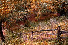 Old  Fence by AIDA DZAKULIC on 500px