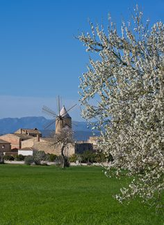 they say ...... it was one of the most beautiful windmills on the island. (Algaida, Mallorca)